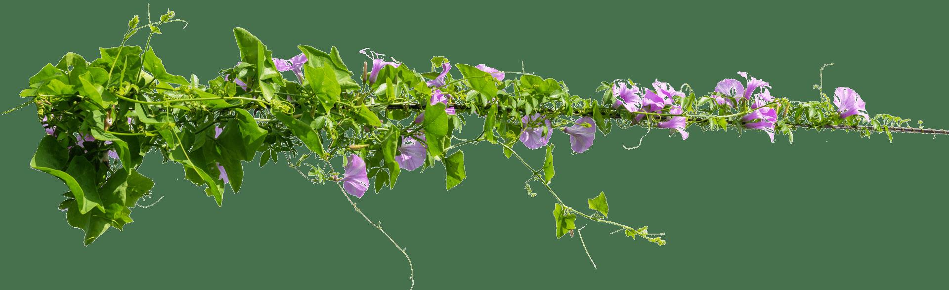 about-gabellini-flower-04